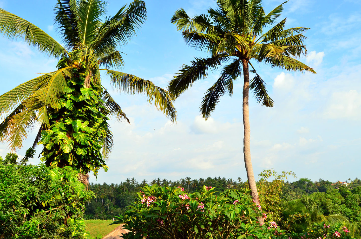 lifestyle redesign  - dsc 0305edited - Bali Travel: Where to Eat and Drink in Ubud